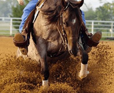 reining horse sliding on arena